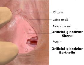 când penisul se află în vagin