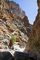Snake Gorge (1).jpg