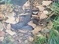 Snakes in Zoo Negara Malaysia (9).jpg