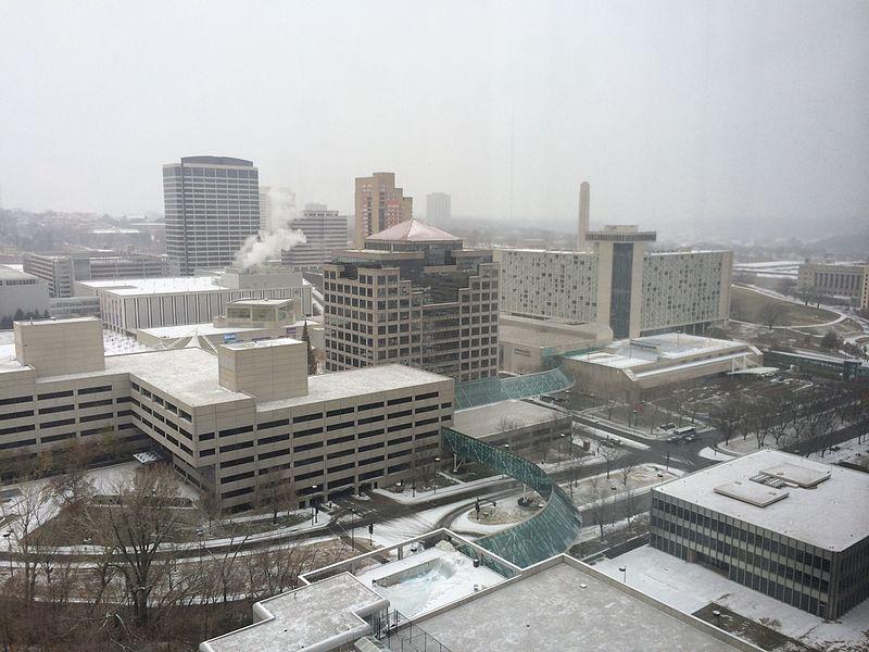 Snowy KC.jpg