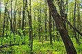 Soft Green (1) (14210208695).jpg