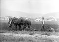 Soldaten mit Pferdegespann beim Pflügen - CH-BAR - 3238544.tif