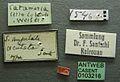 Solenopsis oculata casent0103216 label 1.jpg