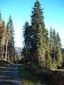 Sommerlicher Herbst Herrenstuhl - panoramio (3).jpg
