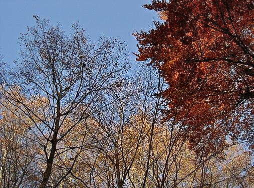 Spätherbst 2012 im Brühler Schlosspark.jpg