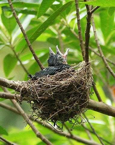 Mnohé druhy vtákov hniezdia na stromoch
