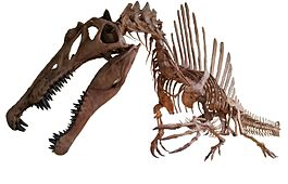 Spinosaurus white background 2.jpg