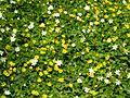 Spring Flowers in Woods - panoramio.jpg