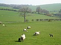 Spring Is Here - geograph.org.uk - 400347.jpg
