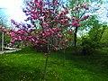Spring in Lovers' Park, Yerevan (3).jpg