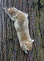 Squirrel in the Public Garden - Boston, MA - DSC03856.jpg