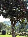 Srinagar - Shalimar Gardens 03.JPG