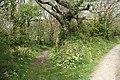 St Gennys, near St Gennys House - geograph.org.uk - 1267794.jpg