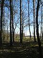 Stary cmentarz, Okolice Rezerwatu Kopca Kościuszki.jpg