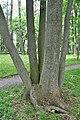 Staryi-park-15056620.jpg