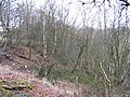 Steep woodland - geograph.org.uk - 339190.jpg