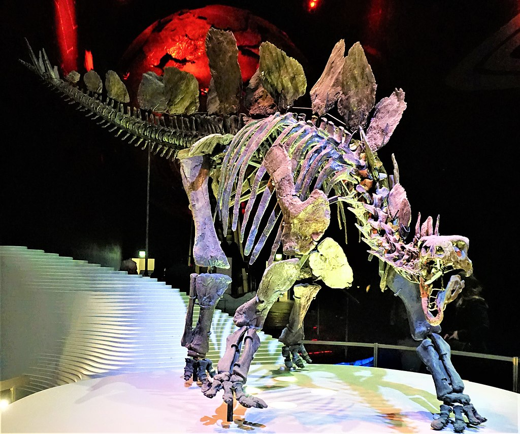 Stegosaurus Stenops - Natural History Museum, London - Joy of Museums