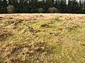 Stone circle on Lakehead Hill 2.jpg
