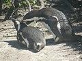 Stony Point Penguin Colony - panoramio (10).jpg