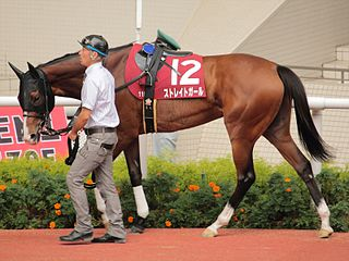Straight Girl Japanese-bred Thoroughbred racehorse