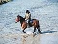 Strandgalopprennen, Wustrow (P1080215).jpg