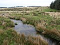 Stream on Bodmin Moor - geograph.org.uk - 794004.jpg