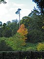 Studley Royal Trees - 1 - geograph.org.uk - 1005870.jpg