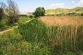 Stymfalia wetland.jpg