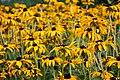 Summerhouse Garden Flowers (8096943941) (2).jpg