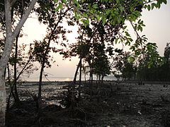 Sun Set in Sundarbans.jpg