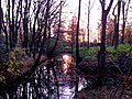 Sunrise in early winter (Netherlands 2013) (11218123364).jpg