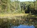 Sweden Vastergotland Anggardsbergen Sandasmossen from SE Sep 2 2021.jpg