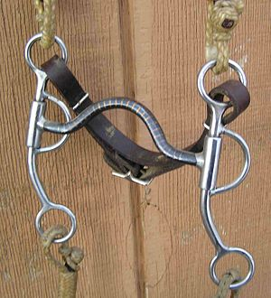 "Pelham bit - A solid medium-port mouthpiece with ring for a snaffle rein, allowing it to be used as a ""cowboy pelham,"" though shown here with only a single curb rein"