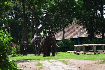THE MAJESTIC ELEPHANTS.jpg