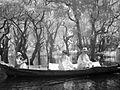 Ta in the mangroves (3748759105).jpg