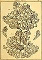 Tableau encyclopédique et méthodique des trois règnes de la nature (1791) (14581546768).jpg