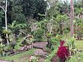 Tamanku.jpg