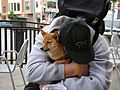 Taro the shiba & his human kai, taking a break from walking (5836979392).jpg