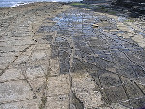 Tessellated pavement - A tessellated pavement at Eaglehawk Neck, Australia, where a rock surface has been divided by fractures, producing a set of rectangular blocks