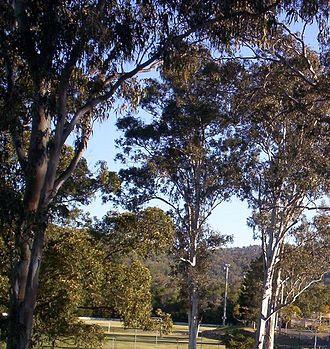 The Gap, Queensland - Walton Bridge Reserve at The Gap
