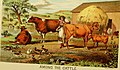 The American farmer's pictorial cyclopedia of live stock (1882) (18122221291).jpg