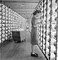 The British Cotton Industry- Everyday Life at a British Cotton Mill, Lancashire, England, UK, 1945 D26001.jpg