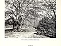 The century book of gardening; a comprehensive work for every lover of the garden (1900) (20563287676).jpg