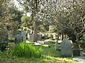 The churchyard of St Just in Roseland in full bloom - geograph.org.uk - 966958.jpg