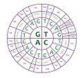 The genetic code wheel.jpg
