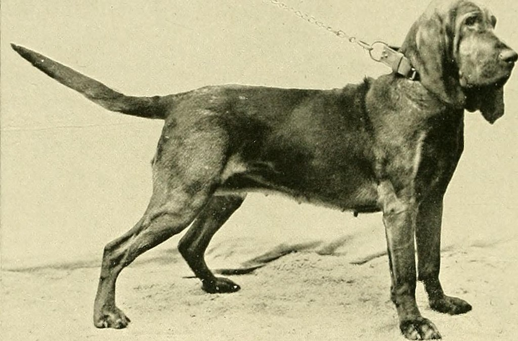 The new book of the dog - a comprehensive natural history of British dogs and their foreign relatives, with chapters on law, breeding, kennel management, and veterinary treatment (1911) (14577065369)