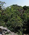 Tikal 2-19 (32632161273).jpg