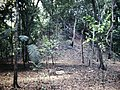 Tikal Complex O Unexcavated Pyramid (9791167164).jpg