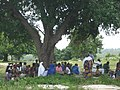 Togo Village tree 02.jpg