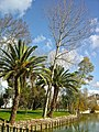 Tomar - Portugal (4199042625).jpg
